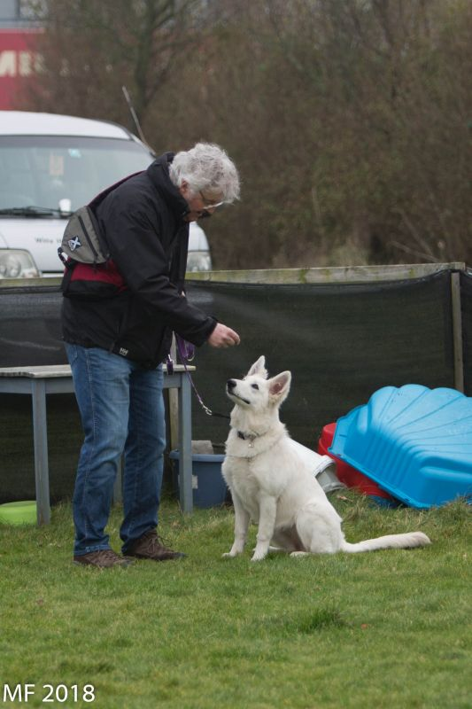 Zwitserse witte herder Misthy's Friend pup Pacific Silver januari 2018