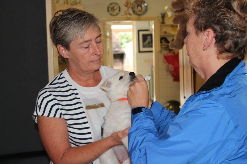 Bezoek chipper aan het P nest op 7 september 2017 aan de beurt is: Pippa
