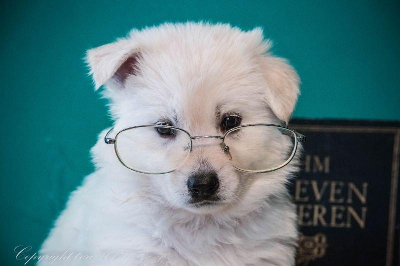 Foto's gemaakt op 5 september 2017 p nest pupje: Pippa