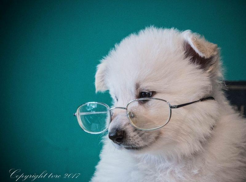 Foto's gemaakt op 5 september 2017 p nest pupje: Wit