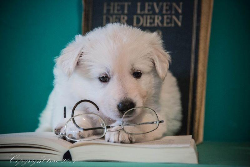 Foto's gemaakt op 5 september 2017 p nest pupje: Romeo