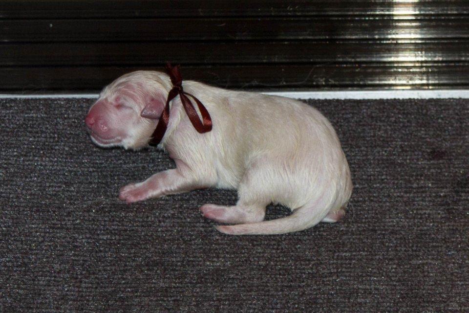 pupje 4 is geboren om 9:35 een teefje