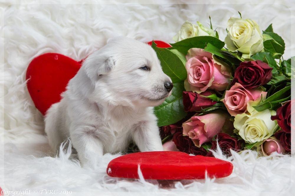 Valentine Foto's gemaakt op 14 februari 2019, pupje reutje