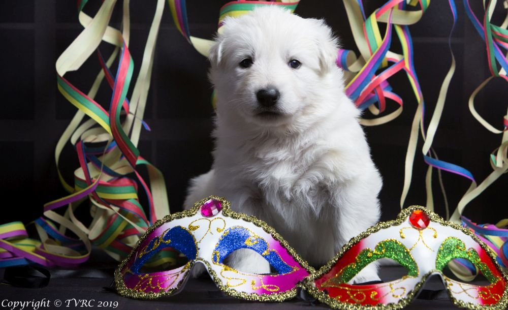 Carnaval Foto's gemaakt op 21 februari 2019, pupje Minka