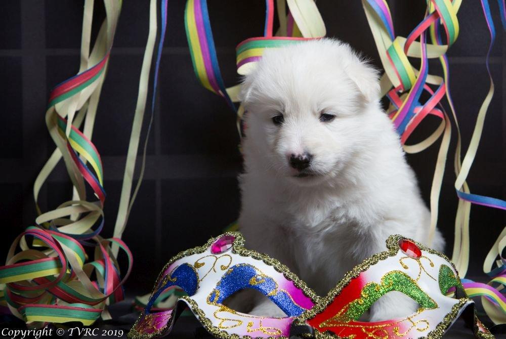 Carnaval Foto's gemaakt op 21 februari 2019, pupje Quelly