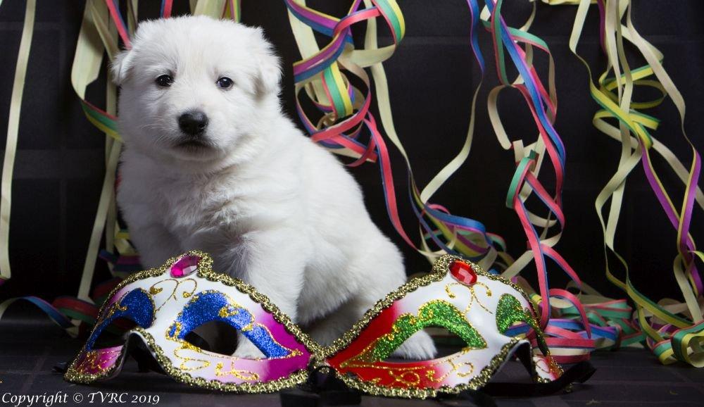 Carnaval Foto's gemaakt op 21 februari 2019, pupje Zoe