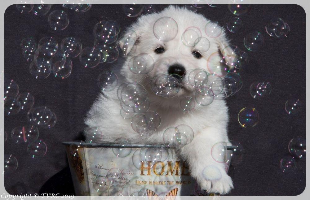 Foto's gemaakt van het Q nest op 28 februari 2019, pup: Teef Blauw