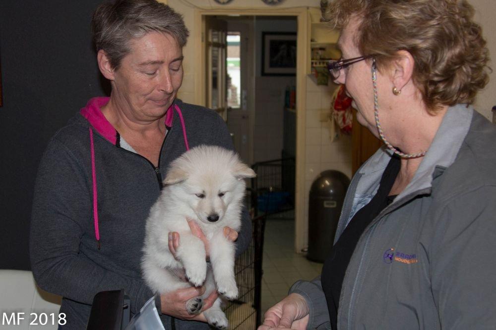 Bezoek Chipper op 6 maart 2019 op de foto pupje Quendi