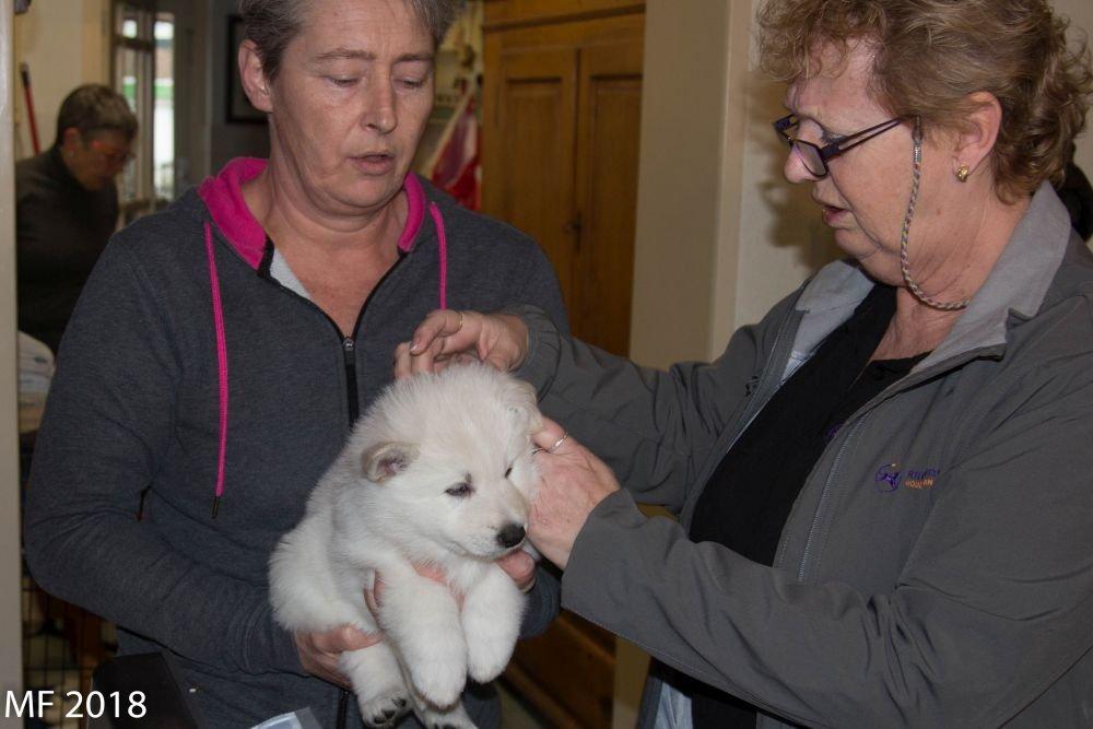Bezoek Chipper op 6 maart 2019 op de foto pupje Queen Iglou