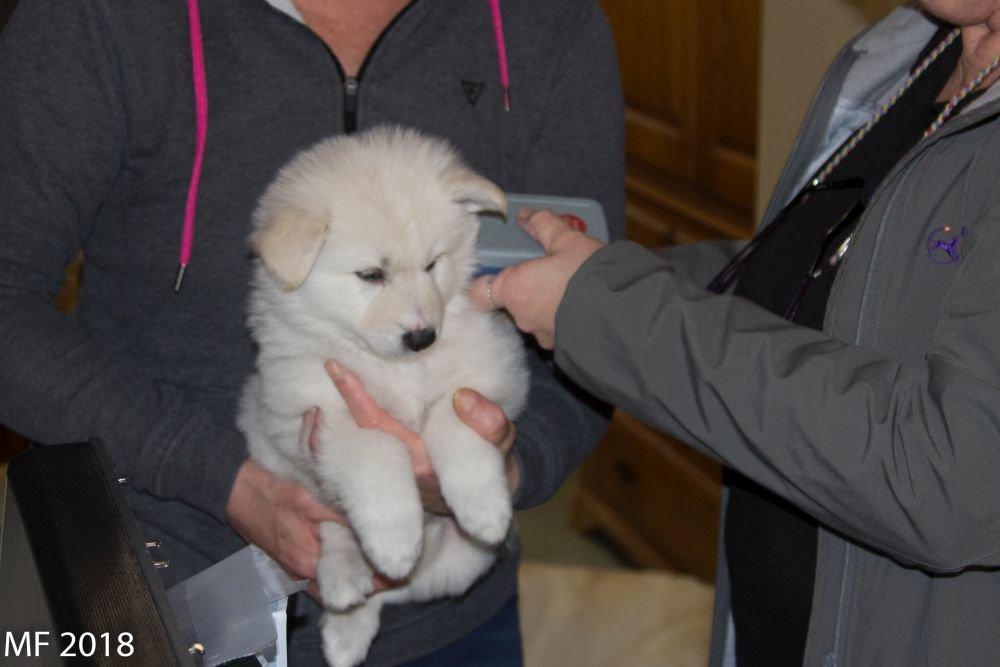 Bezoek Chipper op 6 maart 2019 op de foto pupje Qwinkthy-Qayah