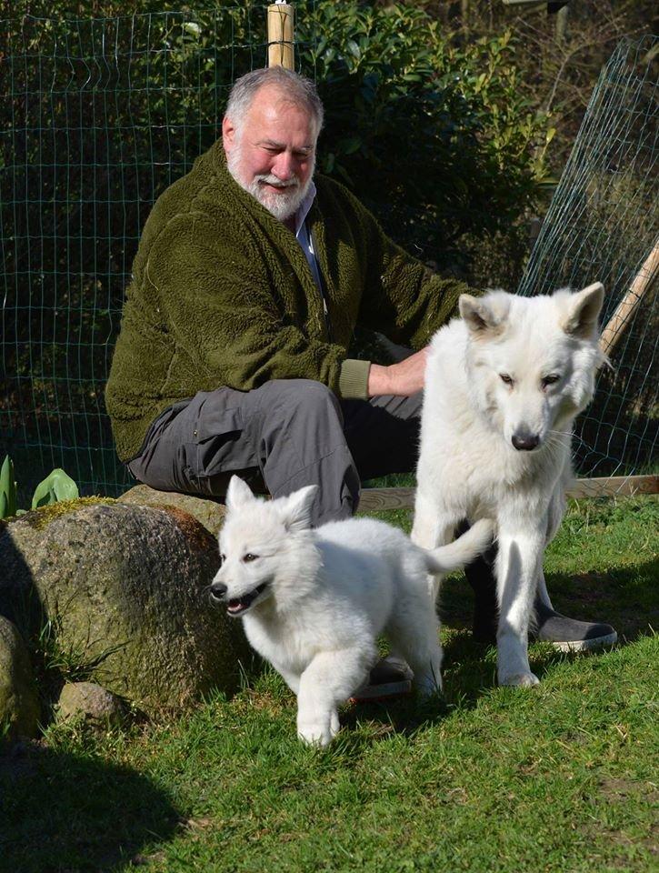 Zwitserse witte herder pup Misthy's Friends Qassia bij haar nieuwe vriendjes