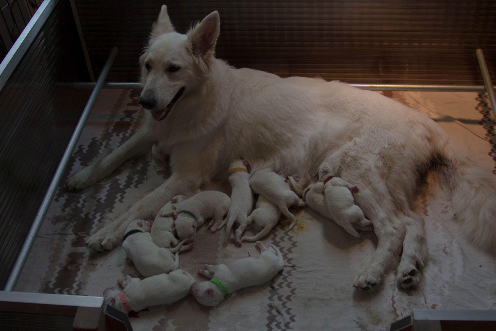 Trotse mama Lola met haar R nest