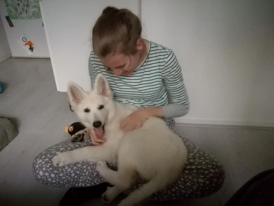 Zwitserse witte herder pup Raeye Oktober 2020