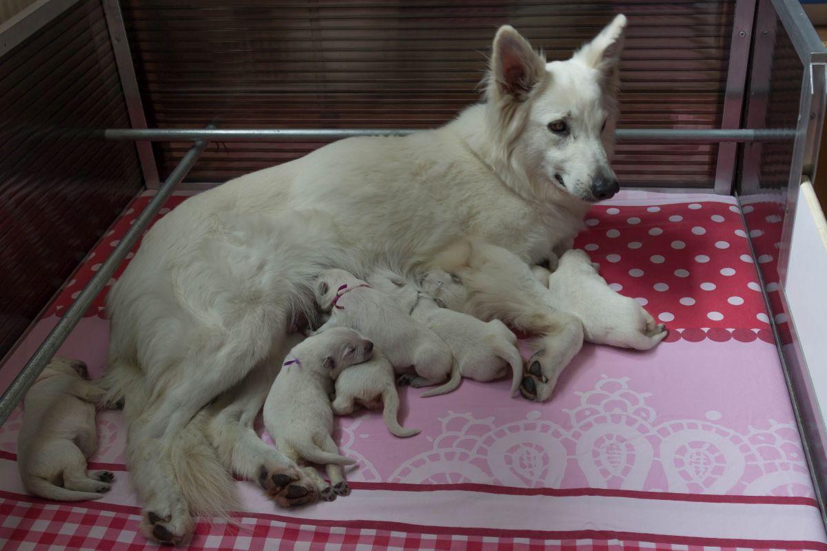 Pups S nest 4 july een schone kist