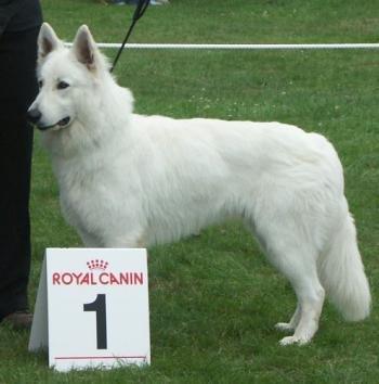 Honden show 1 juli 2007